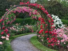 Beautiful garden arbor covered with roses takes us around path to rose garden. I would love to walk that path!!