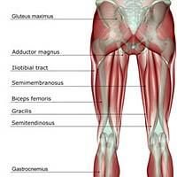 My Personal Lupus Battles: A Pain in the Rear: High Hamstring Tendinitis.. mine hurts/pulls/cramps at the point where it connects to the pelvis. and slowly the cramping pain will work its way down the rest of the leg.