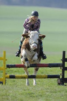 You can laugh at me if you want to, but  i would really like to get a cow and be able to ride it like this