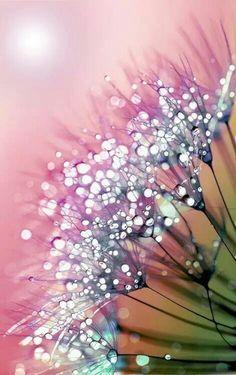 rainbow dandelion Art Print by Joke Vermeer Alcohol Ink Painting, Alcohol Ink Art, Beautiful Images, Beautiful Flowers, Stunningly Beautiful, Foto Macro, Dandelion Art, Dandelion Wallpaper, Fotografia Macro