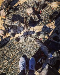 Watch your step!  #birds #pigeons #instagram #portugal #portuguese #lisboa #rossionsquare #love #photograph #travelogue #tarbeldiaries #travel #travelog #europe #shadows #reflection #light #sunnyday #european http://tipsrazzi.com/ipost/1523982557455524506/?code=BUmRg_FByKa