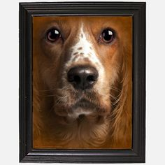 Welsh Springer Spaniel now featured on Fab.