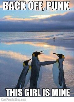 Here Are Some Of The Funny Problems Penguins Deal With Everyday - World's largest collection of cat memes and other animals Penguin Quotes, Penguin Meme, Funny Animal Quotes, Funny Animal Pictures, Penguin Craft, Animal Humor, Animal Pics, Penguin Party, Cute Animals With Funny Captions