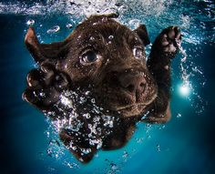 Incredible Underwater Photos of Puppies #pets #photography