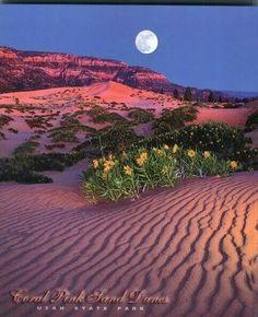 Coral pink sand dunes, State Park, Utah!