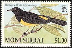 Montserrat Oriole stamps - mainly images - gallery format