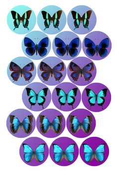 """Blue Butterflies   Bottle cap image pack  Formatted for printing on 4"""" x 6"""" photo paper"""
