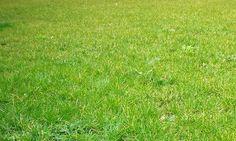 grass texture 010