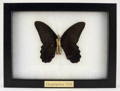 """Chupóptero VIII"" Bronce y mariposa real (13x18m) Laura Salguero"