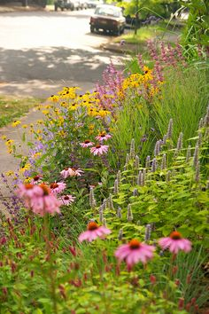 North Border with Echinacea, Rudbeckia, Agastache, Panicum, Verbena, Pennisetum, Salvia and Persicaria