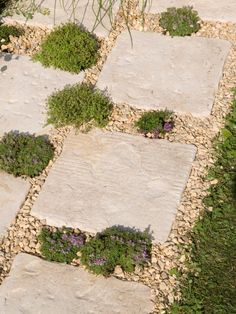 Many herbs withstand the odd footstep and thrive in the warmth reflected from pavers. Plant creeping thymes for the best effect; they will soon blur the sharp edges of the paving. Landscape Plans, Landscape Design, Garden Design, Sidewalk Landscaping, Backyard Landscaping, Landscaping Ideas, Backyard Ideas, Garden Steps, Garden Paths