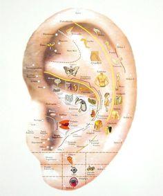 acupuntura pontos orelha