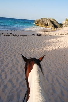 bermuda trails | Pink Sand and Painted Ponies: Wake up to Bermuda Trail Riding