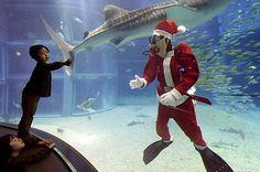 Cos`è questa strana follia collettiva che ci spinge a indossare barbe finte e costumi da renne volanti? E quest`aria da Guinness dei Primati che si consuma nella gara all`addobbo più grande, bello, scenografico? È il Natale, baby, quel momento di frivolezza pagana in cui puoi mordere la storia come fosse un cioccolatino (poi c`è il Natale cristiano, ma quella è un`altra cosa ancora...)