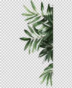 Leaf Be Natural Organic Android, Leaf, Green Leaf Plant PNG Clipart – Garden Flower Background Wallpaper, Flower Backgrounds, Paper Background, Textured Background, Leaf Prints, Art Prints, Photocollage, Aesthetic Stickers, Watercolor Flowers