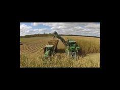 Máy thu hoạch mía đường tại nông trường nước ngoài cực khủng