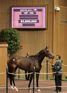 Get to know the millionaire mares that sold this November at Keeneland and Fasig-Tipton's sales and learn where they're going next!