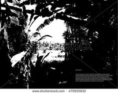 Silhouette of jungle forest. Output of the impenetrable jungle. Thickets. Vector illustration EPS10.
