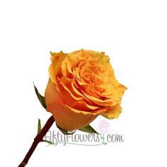 Cosima Orange Rose - pale to mid orange rose