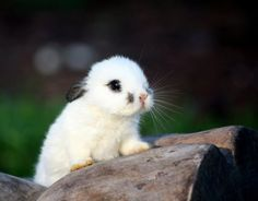 Cute Bunny Photography by Patricia Vazquez - AmO Images - AmO Images