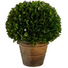 "8"" Preserved Boxwood Ball-Shaped Topiary Plant w/Pot (pack of 2) - APS140-GR"