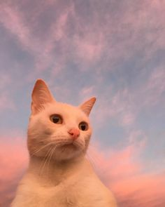 These pretty cats will make you happy. Cats are amazing companions. Animals And Pets, Baby Animals, Cute Animals, Crazy Cat Lady, Crazy Cats, I Love Cats, Cool Cats, Gatos Cool, Image Chat