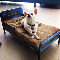 #DIY dog bed from upcycled baby furniture! Get the most out of your thrift store finds. #earth911