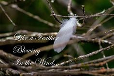 Like a Feather Blowing in the Wind – Atlanta Canvas and Print Canvas Pictures, Print Pictures, Motivational Topics, Are You The One, Poster Prints, Feather, Nature, Atlanta, Products