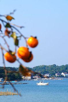 柿と海  in Japan Ise Shima