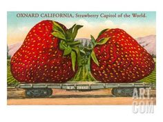 Oxnard Beach Airplane Strawberry Strawberries Fruit Crate Label Art Print