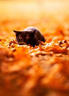 Autumn Black Cat Pounce!