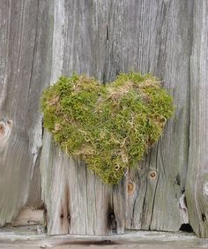 self made moss heart <3 #moss #heart #diy #gardening