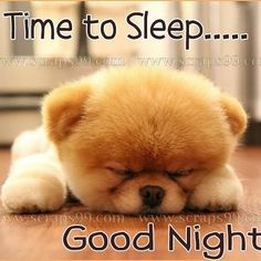the cuttest dog in the world (Boo the dog) - puppies photo Good Night Greetings, Good Night Messages, Good Night Wishes, Good Night Quotes, Cute Good Night, Good Night Sweet Dreams, Good Night Image, Good Night Baby, Baby Puppies