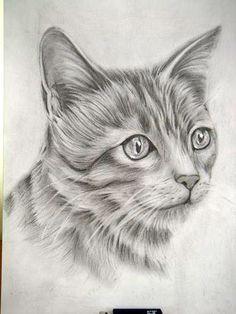 gato terminado sacado de internet