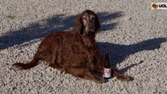 """""""O Grito do Bicho"""": Na Croácia, cães podem pegar uma praia sem estress..."""