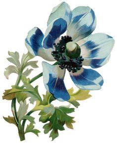 Flowers501