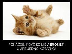 Tweety lajknuté uživatelem Ladislav Ševcůj (@3knedle) | Twitter Cat Condo, Tweety, Fox, Condos, Memes, Cats, Animals, Twitter, Gatos