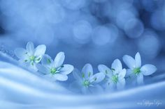 Resonance of Blue by Lafugue Logos   / 500px