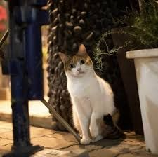 Portraits of Tokyo's Stray Cats by Masayuki Oki