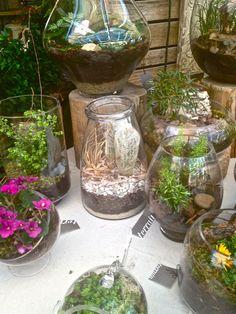 small terrariums