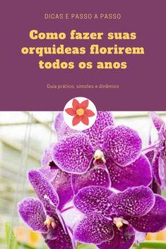 Baixe agora mesmo o Manual de Orquídeas — Guia Definitivo - Orquídeas para Iniciantes Peach, Vegetable Gardening, Everything, Indoor Plants, Flowers, Peaches