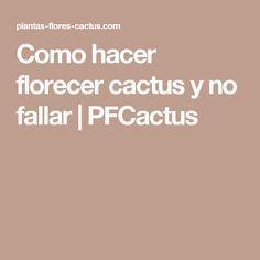 Como hacer florecer cactus y no fallar | PFCactus