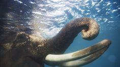 delve underwater with photographer claudia legge