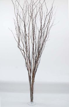 GreenFloralCrafts Extra Tall Natura Birch Branches 5-6 Ft, Bunch of approximately15-18 stems and Preserved Green Limonium -- More info could be found at the image url. (This is an affiliate link) #ArtificialPlants