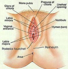 http://na.signwiki.org/images/public/thumb/a/a3/Vagina_diagram.jpg/250px-Vagina_diagram.jpg