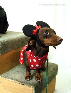 Minnie Mouse Dachshund Costume