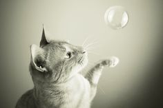 cats and bubbles - Google Search