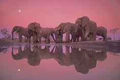 Elephants04