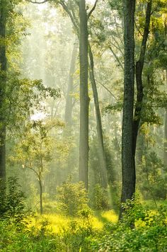 ✯ Sunlit Forest Glade
