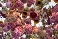 RHS Chelsea Flower Show 2013 – Floral artist Rebecca Louise Law's stand | Flowerona